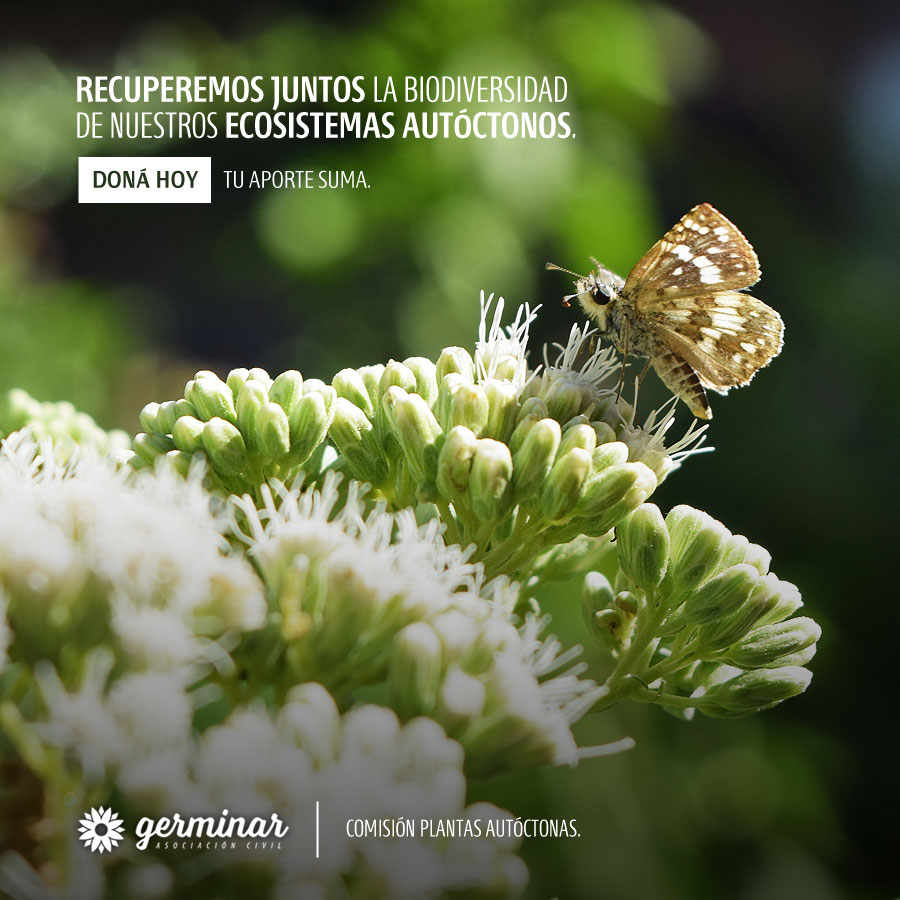 Doná para recuperar la biodiversidad
