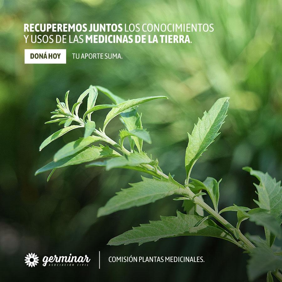 Donar ayuda a recuperar y transmitir los conocimientos sobre plantas medicinales